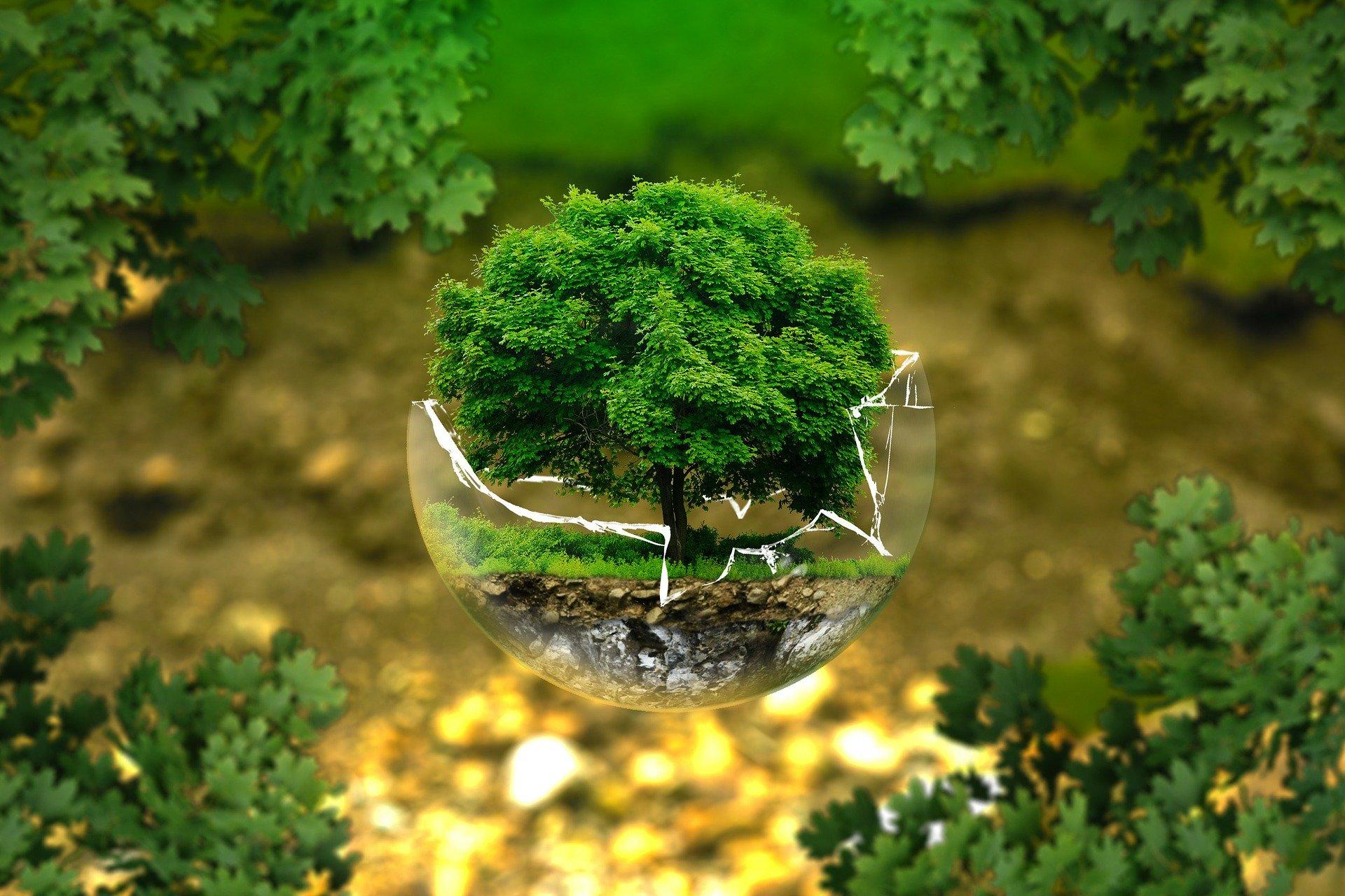 Заходи із захисту довкілля в системі публічних закупівель