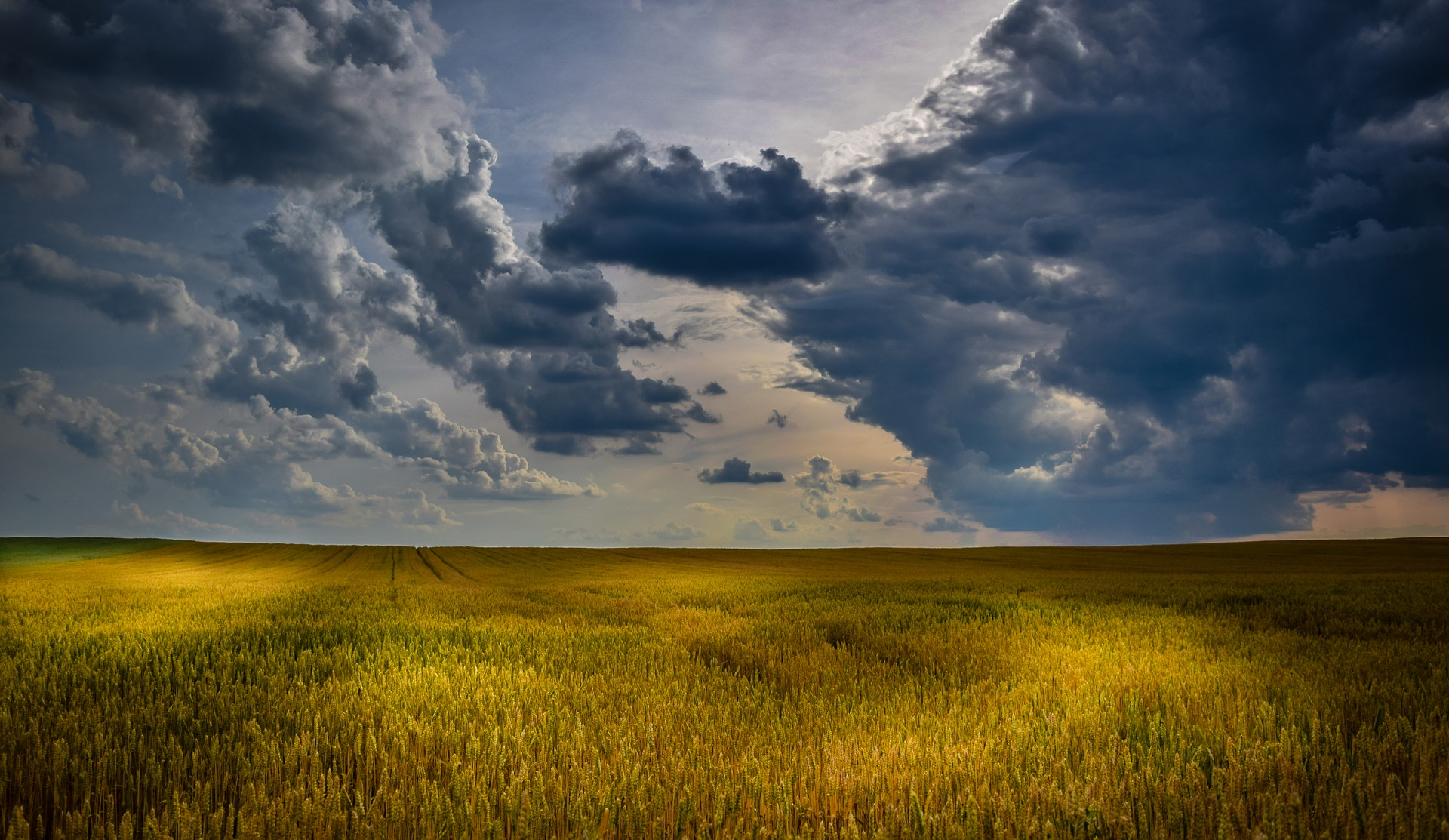 Продаж земель буде відбуватися через систему Prozorro.Продажі