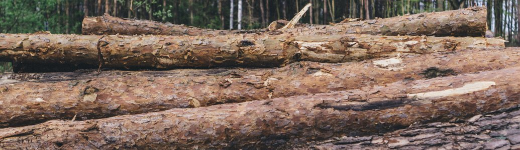 Електронні аукціони з продажу необробленої деревини, як експериментальний проект